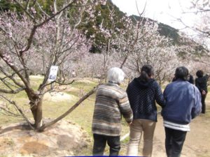四縁 花見
